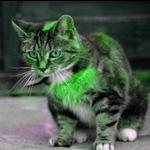 Le vert est dans le chat